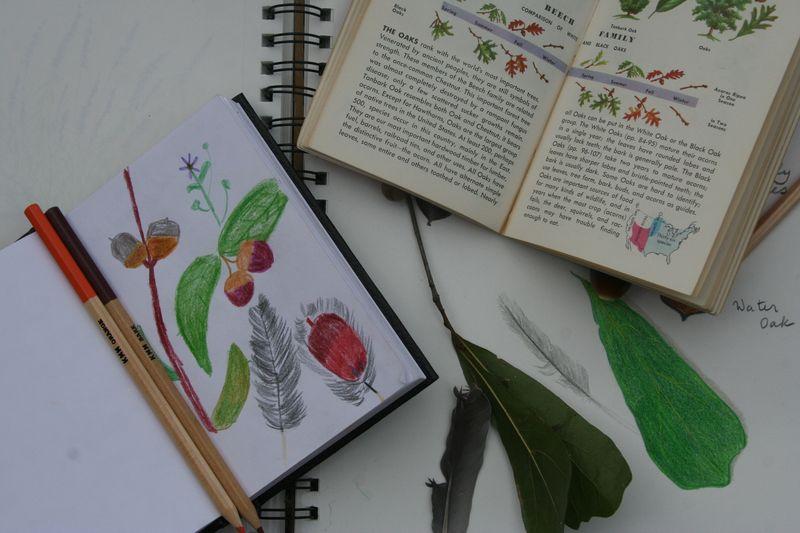 Garden,Nature Journal,C.C. 003