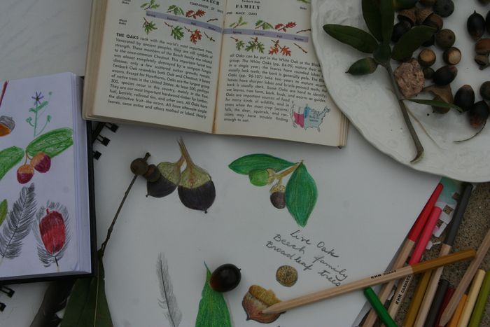 Garden,Nature Journal,C.C. 002